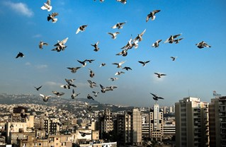Birds Nest: A Photo Essay of Bourj Hammoud