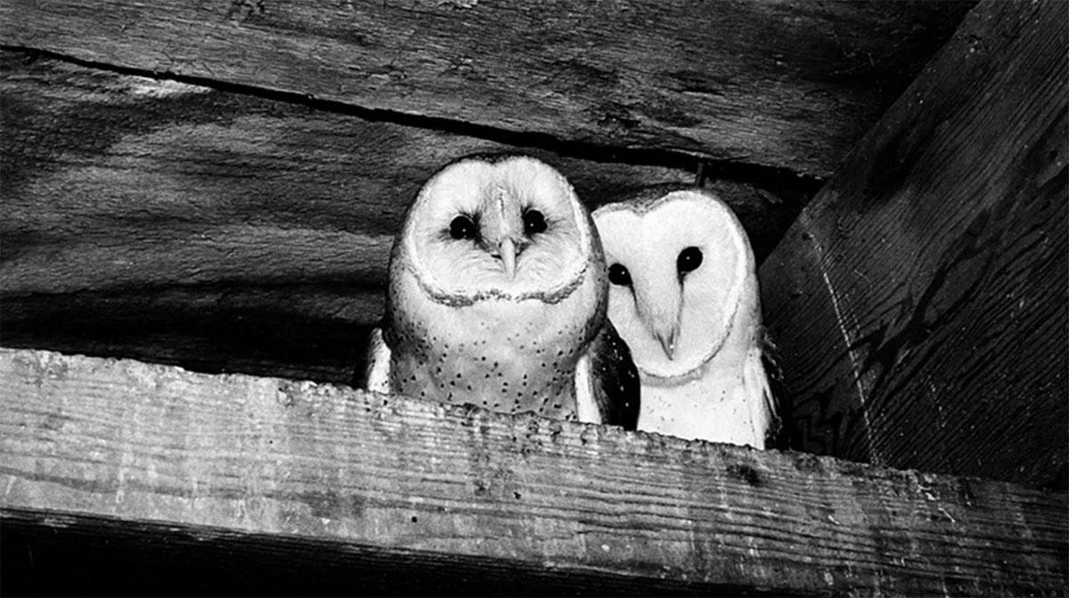 Owlkeeper, Typist, Preservationist: Smithsonian's Amy Ballard