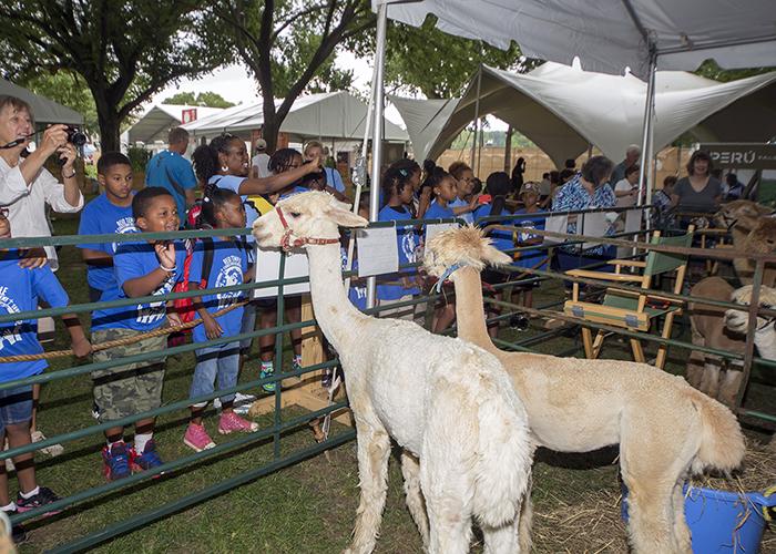 The Alpaca Blessing Ceremony