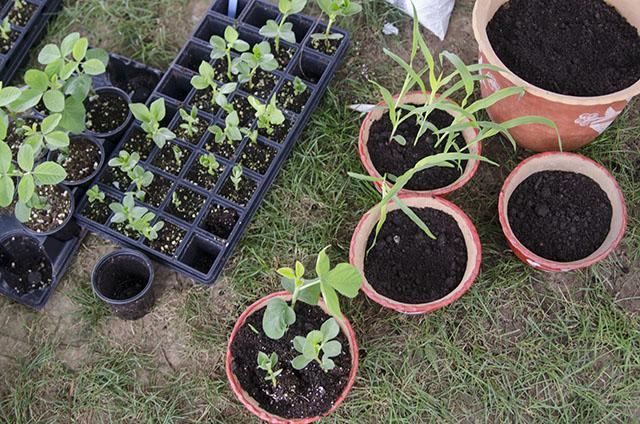 Behind the Scenes: Planting Peruvian Seeds in D.C. Schools