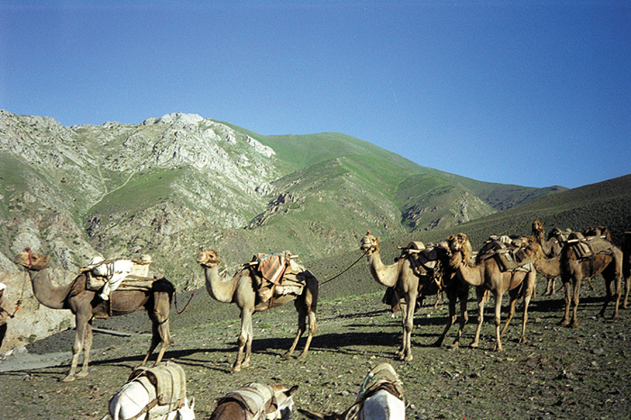 Camel caravans still transport goods between remote villages and towns in parts of Central Asia. This caravan in Badakhshan Province of Afghanistan carries food supplies from the town of Baharak to the isolated village of Shoghnan.