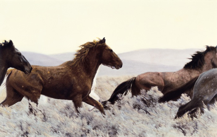 Honest Horses, an exhibition of original hand-painted photographs and narratives about wild horses in the Great Basin, toured regionally and nationally thanks to the Arts and Rural Community Assistance Initiative.