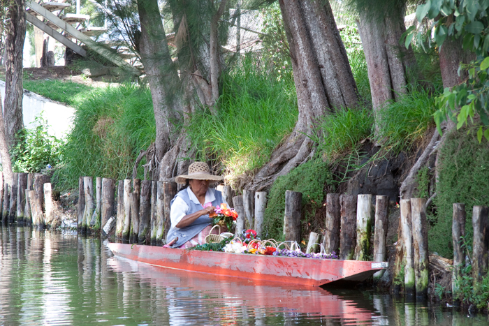 The barge or canoa is used to transport the vegetables and the ornamental plants to the market in Xochimilco.
