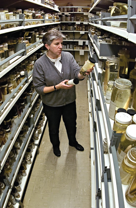 Lynn Parenti, curator and research scientist in the Department of Vertebrate Zoology, Division of Fishes, National Museum of Natural History, stands among a small portion of the museum's four million fish specimens.