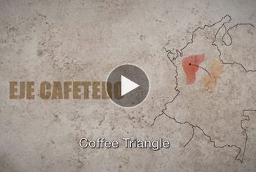 Coffee Triangle traditions at the Festival