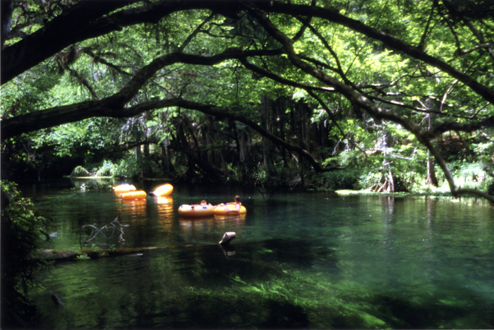Florida's springs provide fresh water for people and wildlife—and their recreational opportunities.