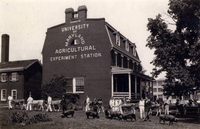 Agriculture experiment stations at land-grant universities were created through the Hatch Act of 1887. One of those, the Maryland Agricultural Experiment Station, hosted a livestock show in 1924.