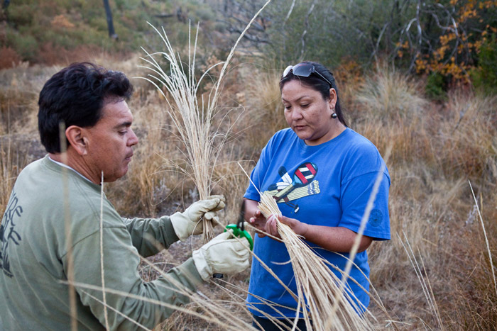 Marta Rodriguez and Abe Sanchez gather deergrass to be used for coiled baskets.