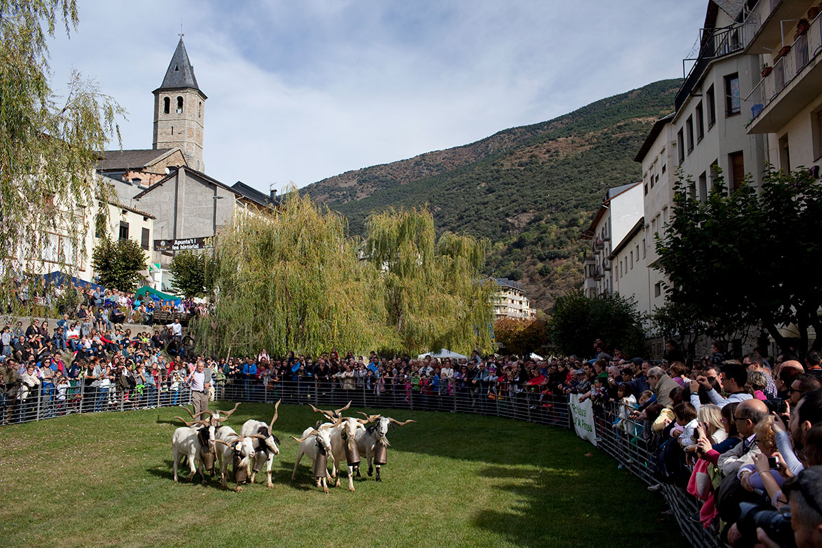 Goats and visitors at a town's fall fair in the Pyrenees.