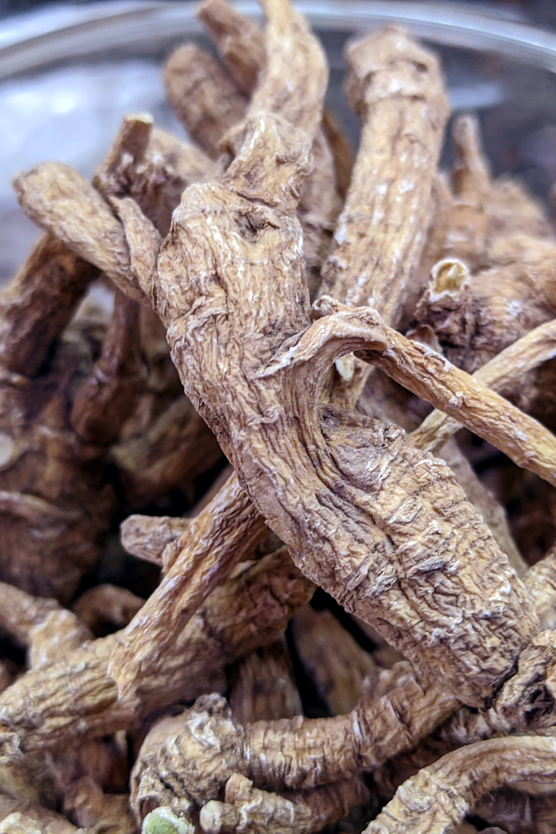 Close-up of dried American ginseng roots