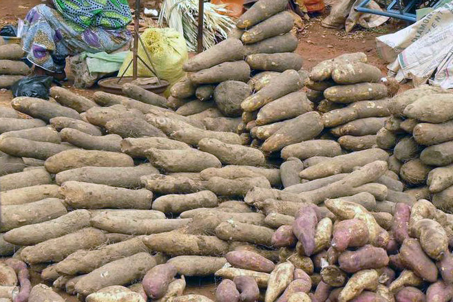 Yams at a market in Benin