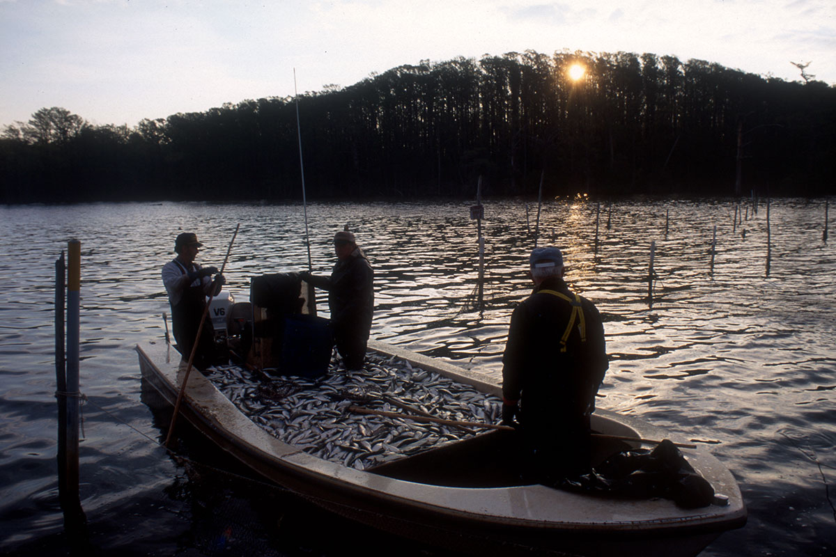Delaware and chowan rivers for Fishing in delaware