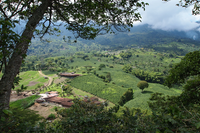 Coffee region, photo by Cristina Diaz-Carerra, Smithsonian Institution