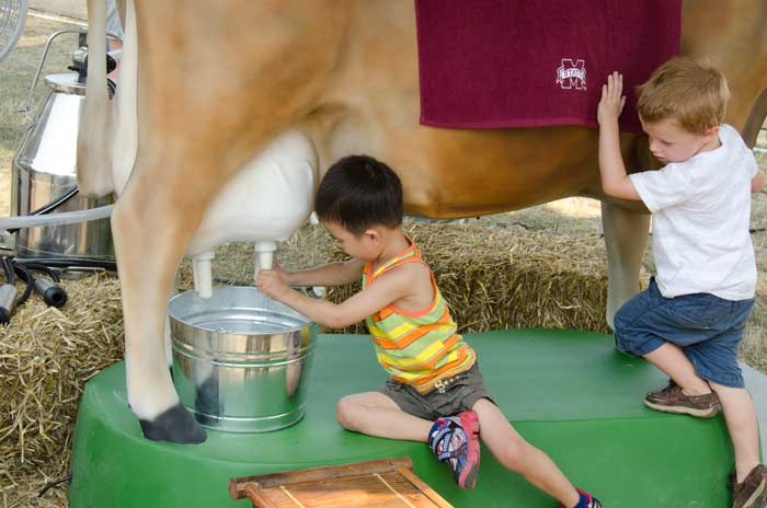 Two visitors try their hands at milking Maggie the dairy cow in the exhibit presented by the Mississippi State University's College of Agriculture and Life Sciences. Photo by Robert Friedman, Smithsonian Institution