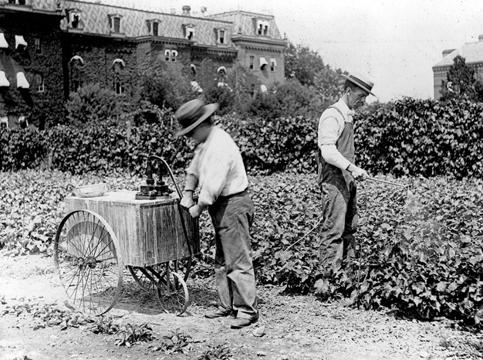 "Dorsett spraying grape vines a little east of the present West Wing of the USDA. ""Pat"" is at the pump; Dorsett at the nozzle, ca. 1914."