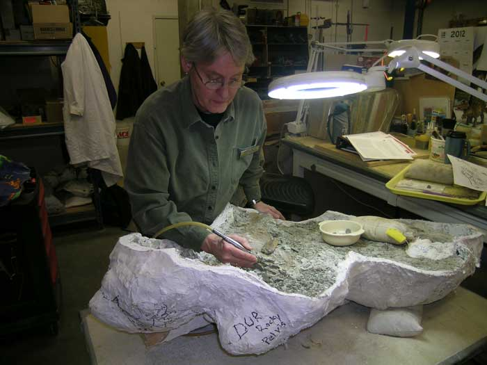 Jamie Jette, fossil preparator at Museum of the Rockies, works on fossil preparation with air scribe. Photo by James Deutsch