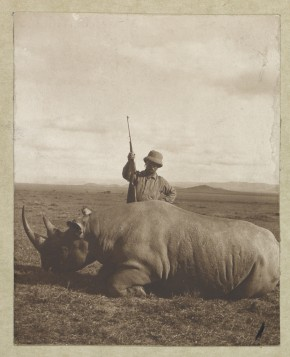 """Col. Roosevelt with his big bull rhino."" Not necessarily the specimen that resides in NMNH today; Roosevelt hunted several different kinds of rhinoceroses in Africa, at least one of which is extinct in the wild today. Photo by Kermit Roosevelt, courtesy of the Library of Congress"