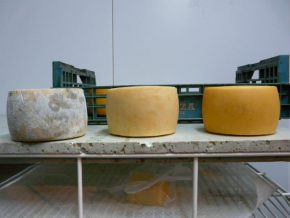 Artzai Gazta Idiazabal cheese. Photo by Mary S. Linn